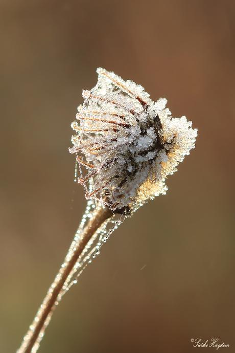 Winterse bloem
