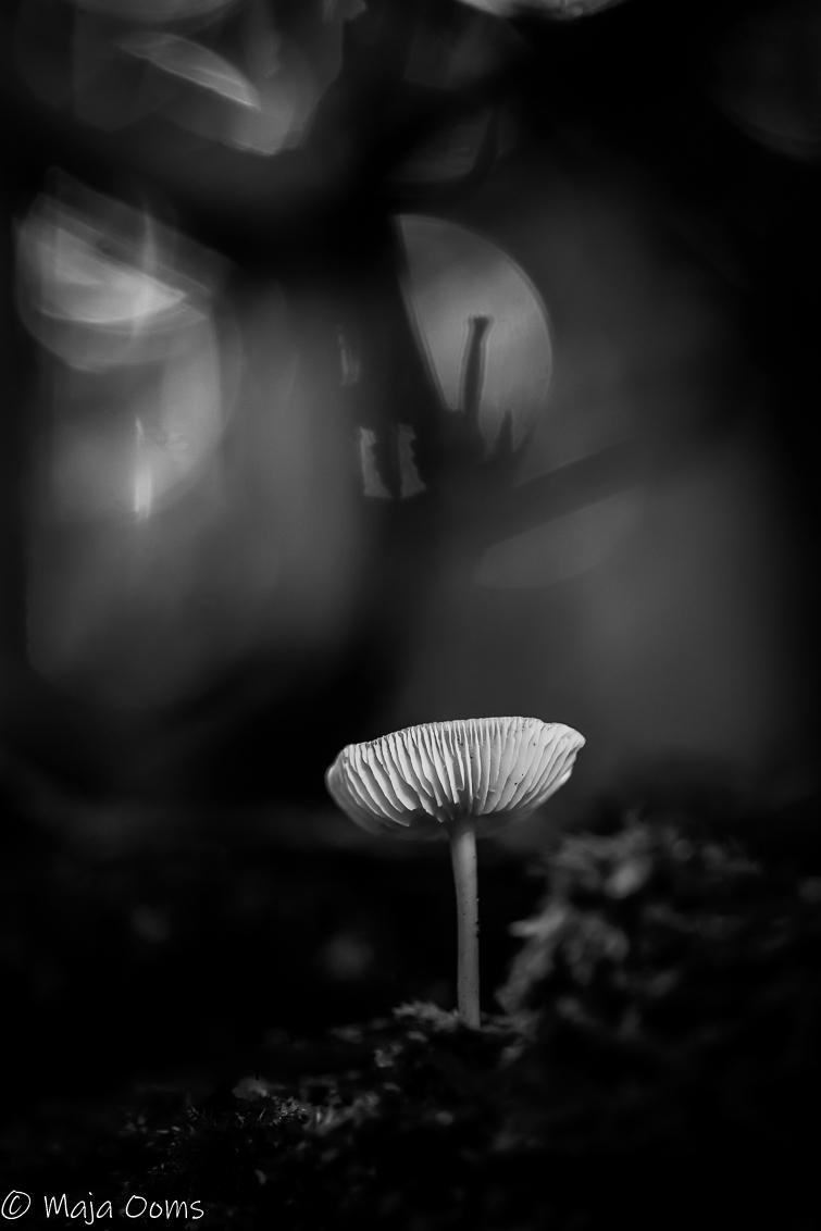 Halloween is coming... - In de achtergrond kreeg ik het gevoel alsof er een soort halloween ontstond...door de lichtbollen en de takjes... Blijf dit toch wel een fijne sfeer - foto door mb83 op 27-09-2018 - deze foto bevat: licht, paddenstoel, bewerking, zwartwit, contrast, bokeh, lightroom