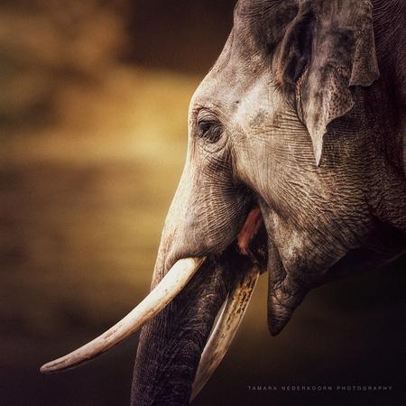 Olifant - - - foto door jeta op 13-12-2016 - deze foto bevat: dierentuin, dieren, safari, olifant, wildlife, close-up, dierenrijk nuenen