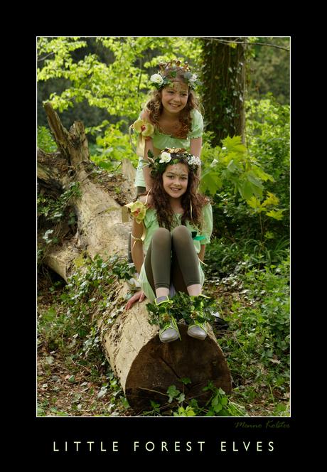 Little Forest Elves