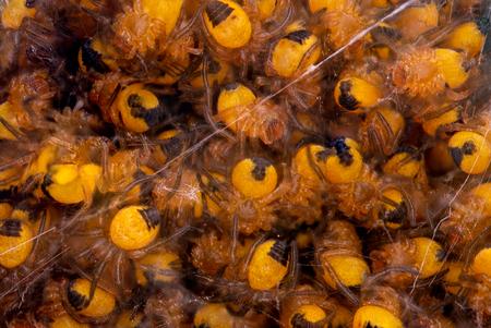 Nestje bouwen - De natuurlijke vijand van de mug maakt zich klaar voor de zomer - foto door RBvandaag op 12-05-2019 - deze foto bevat: macro, natuur, spin, tuin, focusstack