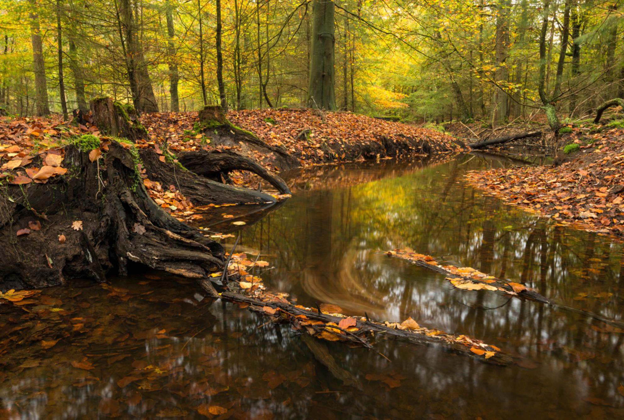Hersft - Herfst in de Nederlandse bossen, in dit geval de Leuvenumse Beek.  Wegens Corona de trip naar de Hoge Venen in Belgie afgezegd en in Nederland op zo - foto door weimaraan op 03-11-2020 - deze foto bevat: groen, boom, water, natuur, geel, licht, herfst, blad, landschap, bos, nederland, stroom, beek, herfstkleuren, herfstbos - Deze foto mag gebruikt worden in een Zoom.nl publicatie