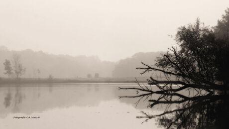 Mystical call of the lake