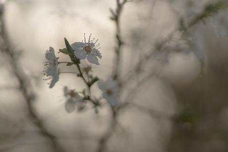 Dromen van de lente
