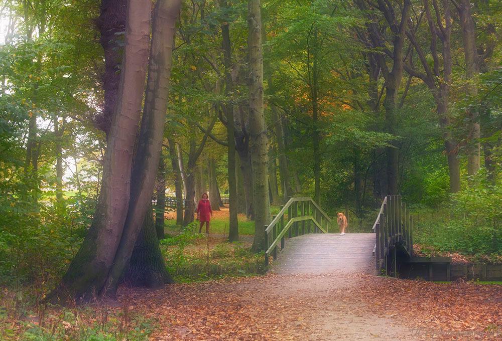 Ik kom... - Nieuwsgiering kwam hij rennend naar mij toe, een heerlijk leuk spontaan beestje.   Iedereen bedankt voor de hele fijne reacties bij mijn vorige opn - foto door Dodsi op 27-10-2018 - deze foto bevat: groen, boom, natuur, park, licht, herfst, dieren, landschap, bos, hond, bomen, brug, wandelen, ockenburgh