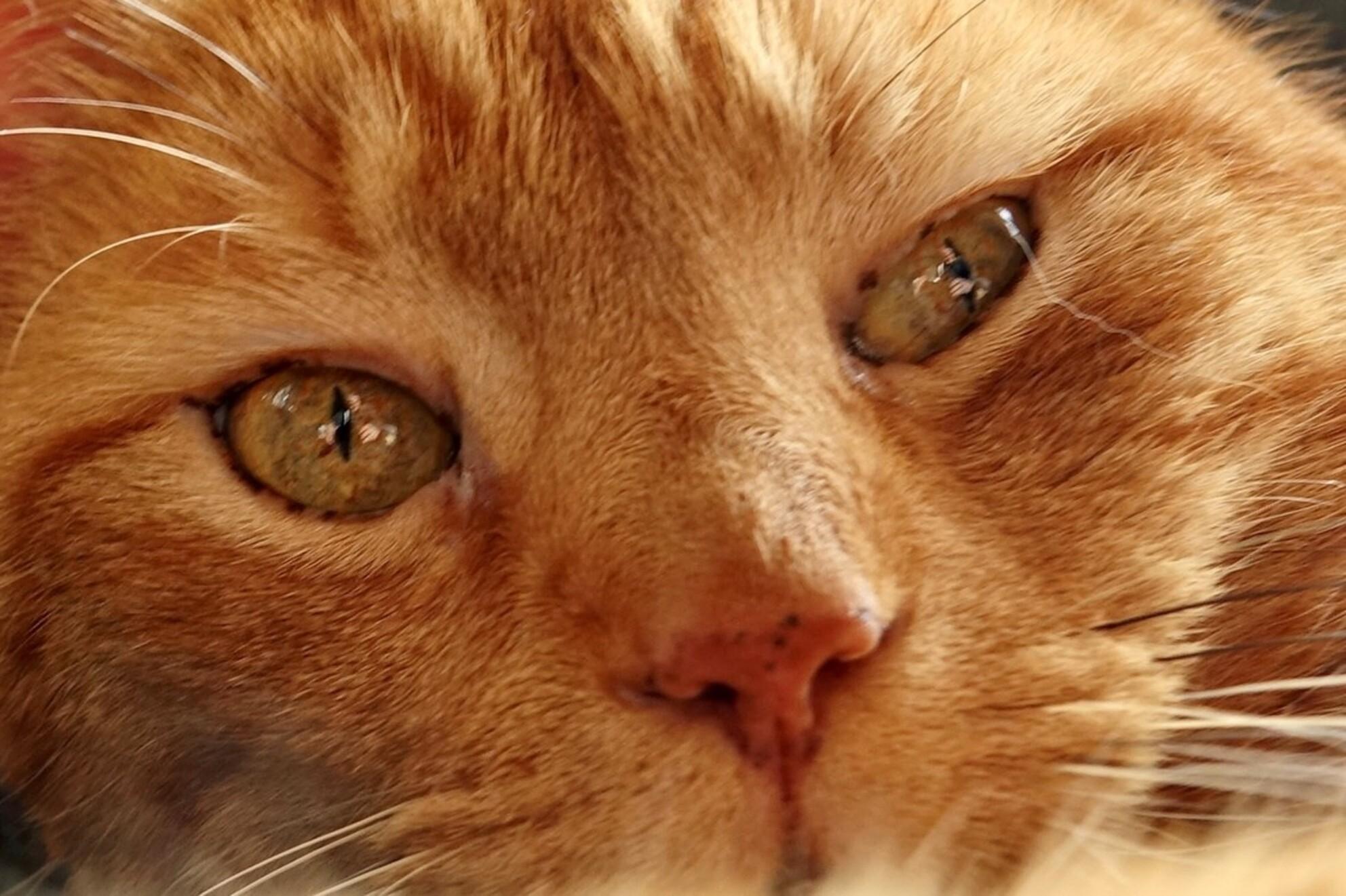 Ik zie de fotograaf - De ogen van een kat verbergen niets. - foto door BertTho op 03-03-2021 - deze foto bevat: poes, dieren, kat - Deze foto mag gebruikt worden in een Zoom.nl publicatie