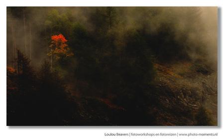 Misty mountain - Miezerig en mistig weer, en op de momenten dat het weer iets opklaart is het eigenlijk altijd prachtig weer voor fotomomenten. - foto door LoulouBeavers op 15-12-2011 - deze foto bevat: herfst, mist, alpen, alp