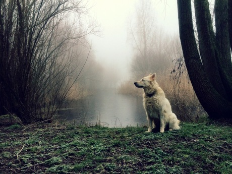 Smelling Winter