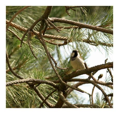 (2) Huismus zit geposeerd op de tak v/e boom (2)