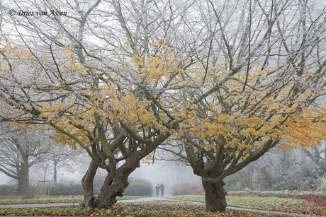 Herfst-winter en mist 2-12-2017