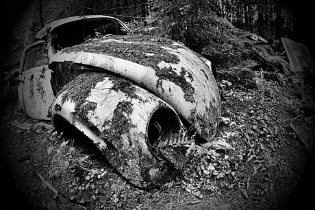 Car Graveyard 16