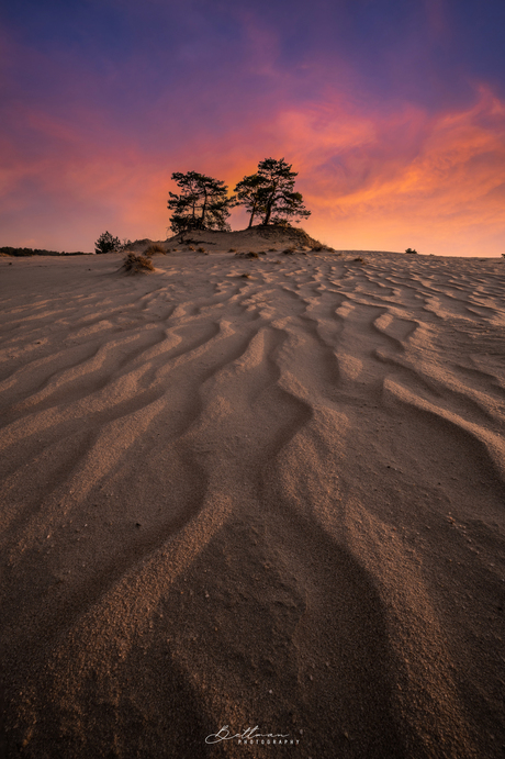 Into the dunes