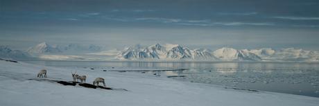 Colesdalen - Spitsbergen