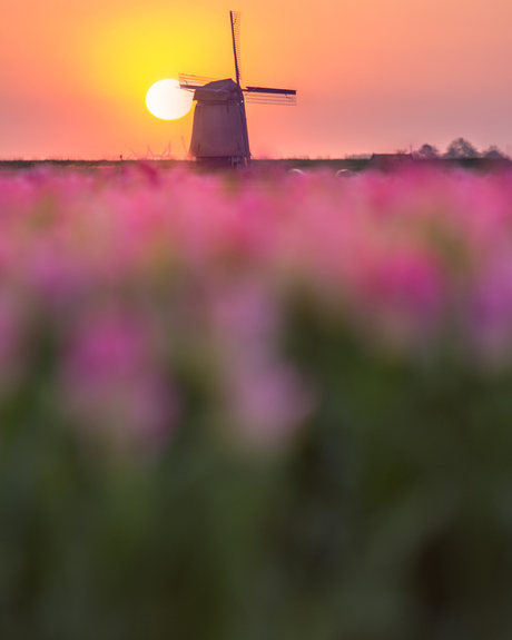 Hollandse Ochtend
