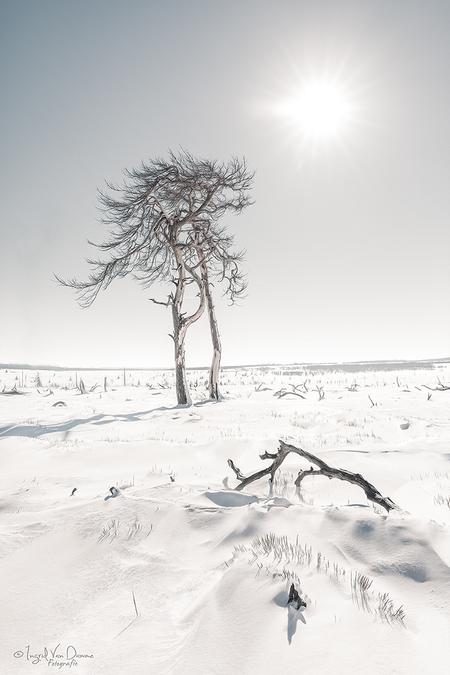 Twin - dank je vr de fijne feedback op m'n vorige inzending. - foto door mgtf op 07-03-2018 - deze foto bevat: lucht, zon, natuur, licht, sneeuw, winter, vakantie, ijs, landschap, bos, bomen, canon, Hoge venen, 5dmkiv