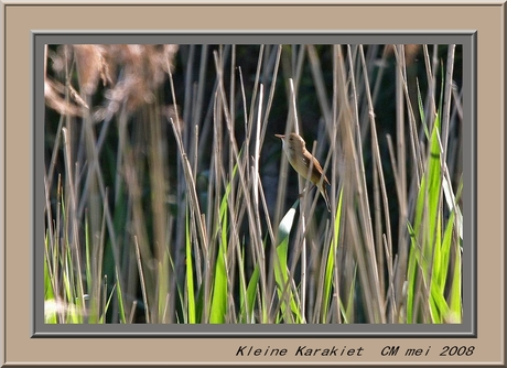 Kleine Karekiet