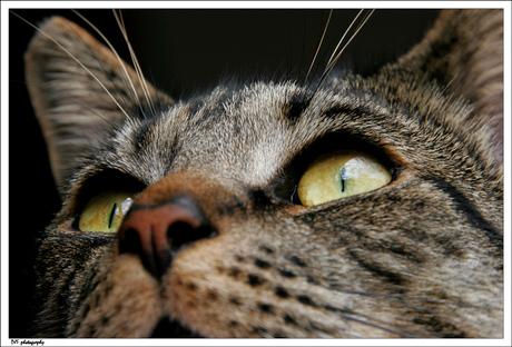 Stitch the cat 2