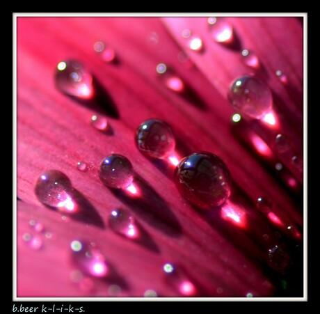 bloemenwater