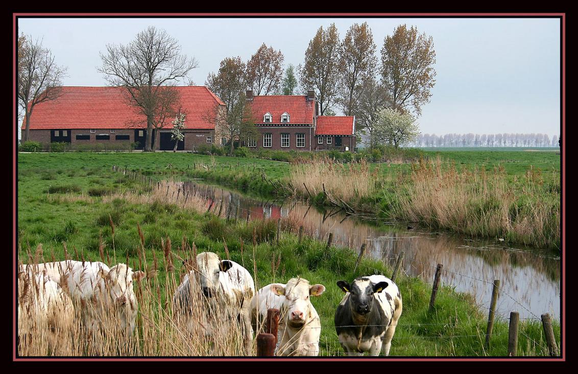 boerderij - foto van dikken - Zoom.nl