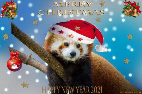Rode kerst panda