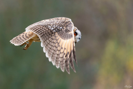 Focus in flight