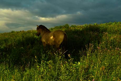 Paard op de uitkijk