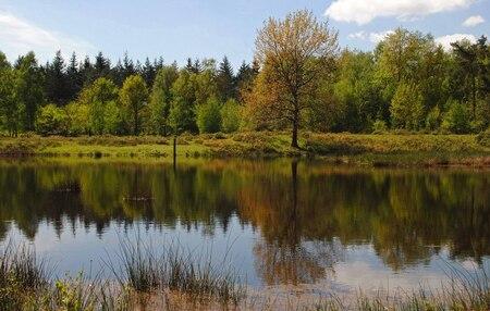 Oever - Dit is de oever rechts van het water van de vorige foto een dag later. Deze keer heb ik het droog gehouden :D In Boswachterij Dorst - foto door Tanneke op 29-05-2015 - deze foto bevat: groen, zon, water, natuur, landschap, bos, voorjaar, bomen, Boswachterij Dorst, leemput