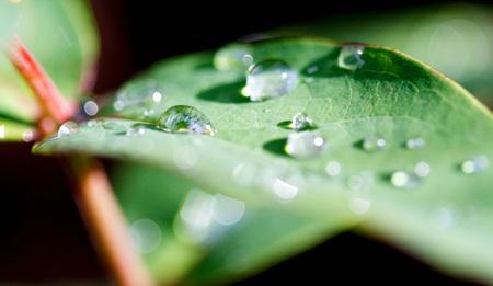 dauwdruppels - In de achtertuin...ochtendzon en dauwdruppels - foto door seyda_hakki op 20-10-2010 - deze foto bevat: zon, water, natuur, herfst, blad, planten, druppels, dauw
