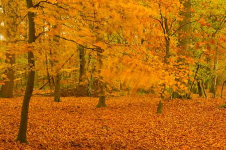 zuchtje wind - Nog steeds herfst. Iets langere sluitertijd gebruikt. groetjes Detty - foto door dettyverbon op 24-11-2013 - deze foto bevat: herfst, blad, wind, bos, bomen, liesbos