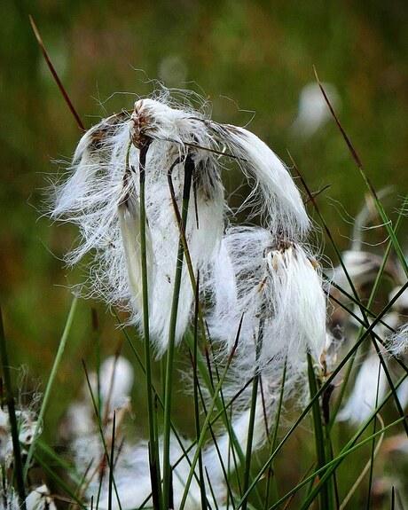 Eerbied voor grijze haren.