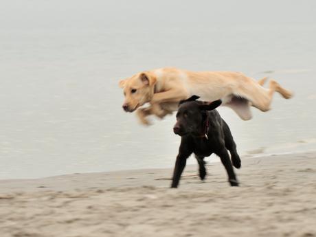 Tess en Zoë op het strand