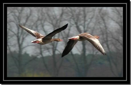 In vogelvlucht...