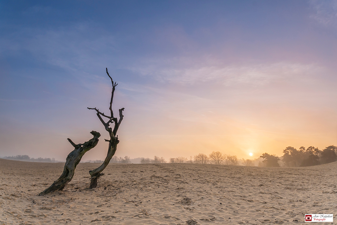 Stilleven - Zaterdag naar de Loonse en Drunense Duinen geweest. Onderweg was het erg mistig, zo ook bij aankomst. Helaas trok de mist snel weg en was de mist bij - foto door fotografie-2 op 28-03-2016 - deze foto bevat: lucht, zon, lente, natuur, licht, landschap, mist, duinen, tegenlicht, zonsopkomst, bomen, zand, nederland, boomstronk, fotografie, zandverstuiving, landschapsfotografie, noord-brabant, loonse en drunense duinen, jan koppelaar fotografie, jan koppelaar