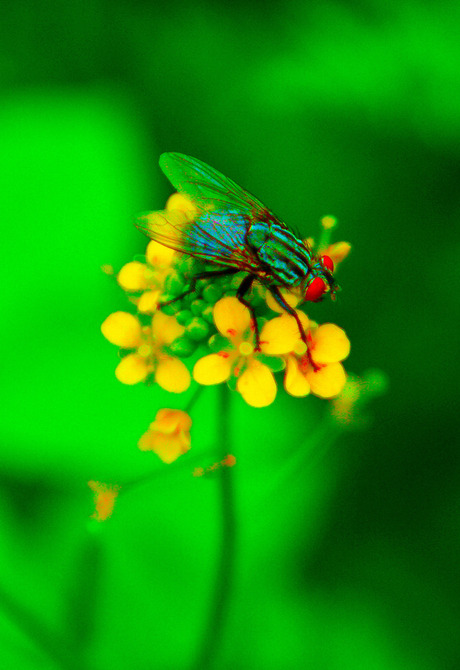 Fly and colors