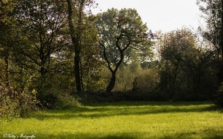 Landschap in de herfst.