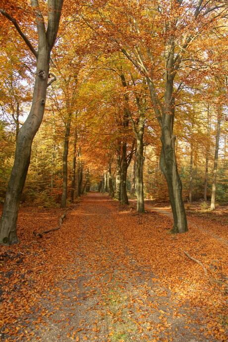 Het Willemsbos