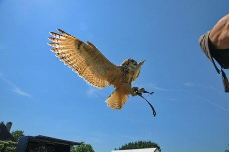 Uil in landingfase