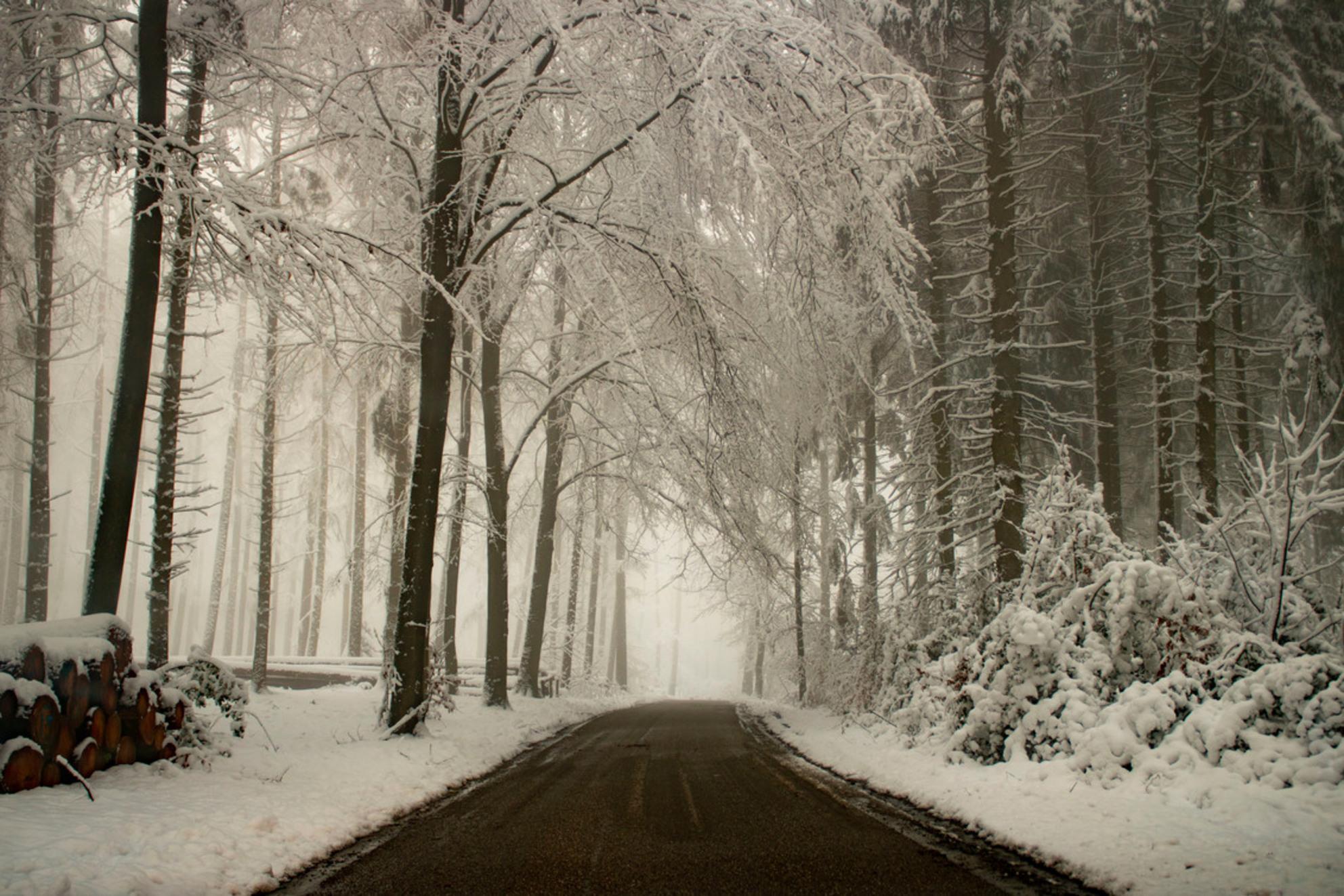 Onderweg.. - Vijlenerbos, Vijlen, Zuid-Limburg in de sneeuw. - foto door Carla34 op 29-01-2021 - deze foto bevat: straat, natuur, sneeuw, winter, landschap, bos, bomen, vijlen, vijlenerbos, zuid-limburg