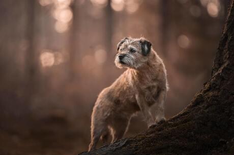 Anooby Hondenfotografie
