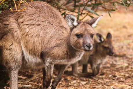 Samen schuilen voor de regen - Australie