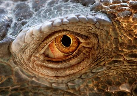 el ojo de la iguana