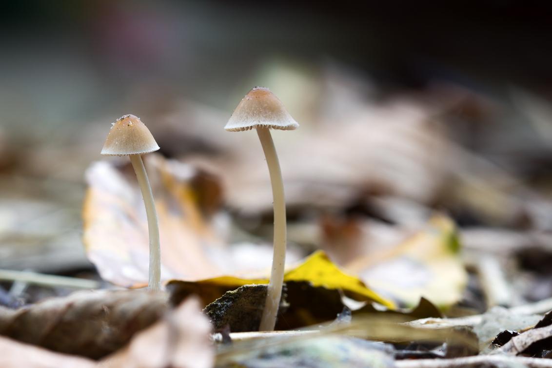 Project Inspiratie, Herfst - :-) - foto door brinkbeest op 31-10-2013 - deze foto bevat: macro, herfst, paddenstoelen, project I, project inspiratie