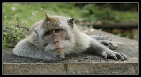 A monkey in Uluwatu