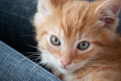 Kitten Kareltje