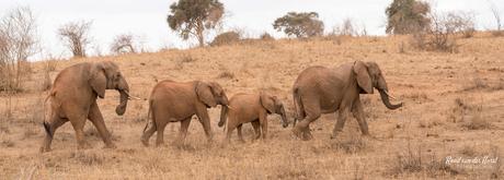 olifanten Pano