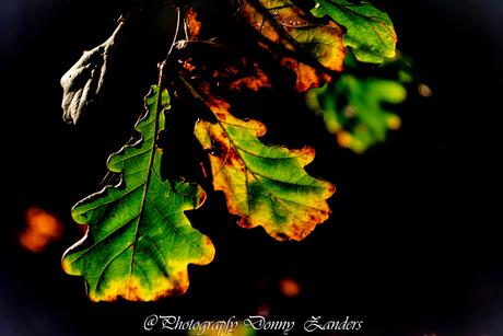Bladeren in het licht