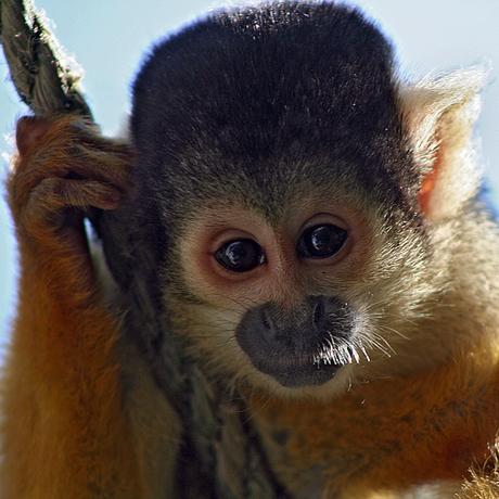 aapjes kijken..