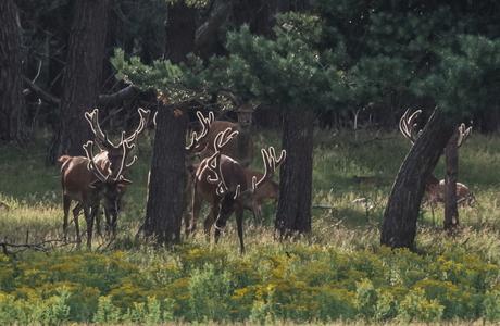 luminescent antlers
