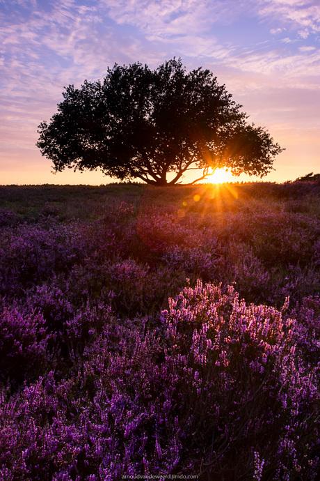 Sunset Tafelberg Blaricum