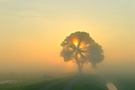 Zonneschijn door de boom